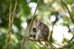 Female Long Tailed Macaque with holding her tiny baby Royalty Free Stock Image