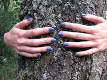 Young female hands embracing a tree. Female hands hugging a tree in the forest stock photos