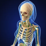 Female Lymphatic system x ray Royalty Free Stock Photos