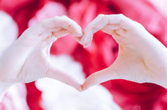 Female make hands heart on valentine day. Female hands in the form of heart against the red flowers background. Love Valentines and Mothers Day concept. Shallow stock image