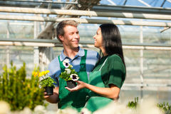 Female and male gardener in market garden or nursery. Male and female florist or gardener in flower shop or nursery Stock Image