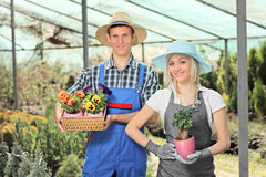 Female and male gardeners holding flower pots in a hothouse. Female and male gardeners holding flower pots and posing in a hothouse stock images