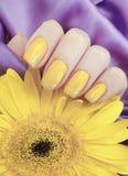 Female manicure, gerbera flower elegance,lifestyle  silk fabric royalty free stock photo