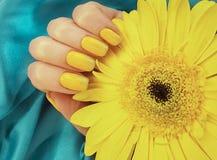 female manicure, gerbera flower, silk fabric royalty free stock image