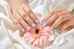 Female manicured hands holding gerbera. Beautiful woman hands with winter design manicure holding peach color gerbera flower. Feminine delicacy and ternderness Royalty Free Stock Photo