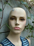 Female mannequin. Close-up of a damaged female mannequin head Stock Images