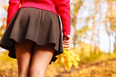 Female with maple leaves in hand. Autumnal park scenery Royalty Free Stock Images