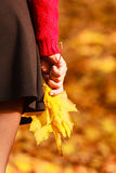 Female with maple leaves in hand. Autumnal park scenery Stock Image