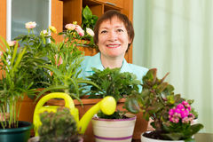 Female mature gardener with plants smiling Stock Images