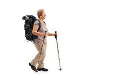 Female mature hiker walking Stock Photos