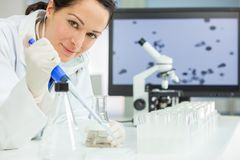 Female Research Scientist With Pipette & Flask In Laboratory. A female medical or scientific researcher or scientist using a pipette and flask in a laboratory stock photography