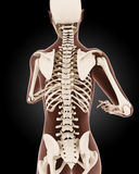 Female medical skeleton Royalty Free Stock Images