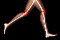Female medical skeleton legs in running pose Stock Photography