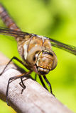 Female Migrant Hawker Stock Photo