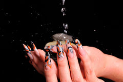 Female nails and falling drops of water Stock Photography
