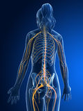 Female nerve system vector illustration