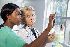 Female nurse and doctor looking at xrays Royalty Free Stock Photo