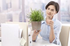 Female office worker holding potted plant. Looking after green plant, smiling Royalty Free Stock Image