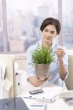 Female office worker holding potted plant. Female office worker sitting at desk looking after green plant in pot, smiling Stock Photography