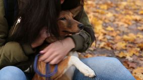Woman caressing her cute dog gently in autumn park stock footage