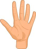 Female palm. Royalty Free Stock Image