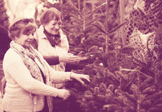 Female pensioners buying New Year tree at fair Royalty Free Stock Photo