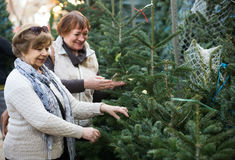Female pensioners buying New Year tree at fair Stock Photos