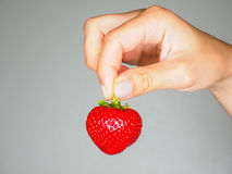 Female person holding a fresh red strawberry towards gray Royalty Free Stock Photography