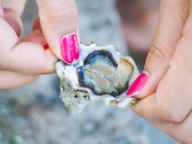 Female person holding an oyster mussel Stock Image