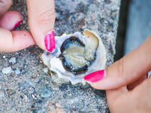 Female person holding an oyster mussel Stock Photo