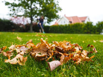 Female person raking green grass from brown leaves at autumn Royalty Free Stock Photography