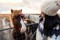 Female petting Icelandic horse on Iceland road trip royalty free stock image