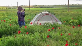 Female photographer on flower field near travel tent. Young beautiful woman in checkered shirt stands near tent on field in the middle of green grass, yellow stock footage