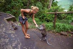 Female photographer and monkey Stock Images