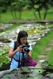 Female photographer. Female photograper shooting lotus flowet Stock Photo