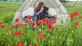 Female photographer takes picture of poppies sitting near travel tent. Young beautiful woman in checkered shirt sits near tent on field in the middle of green stock footage