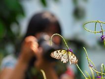 Female photographer taking a photo of a butterfly Royalty Free Stock Photography