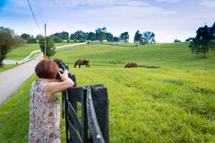 Female photographer taking picture of country landscape with hor Royalty Free Stock Images