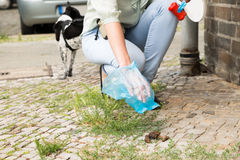 Female Picking Up Dog Feces. Close-up Of Female Hand Picking Up Dog Feces With Plastic Bag Royalty Free Stock Photos