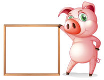 A female pig beside an empty wooden frame Stock Images