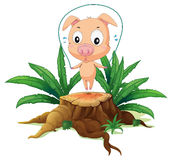 A female pig playing above the stump Royalty Free Stock Image