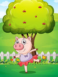 A female pig playing at the yard near the big tree Royalty Free Stock Image