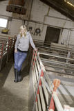 Woman in a pigfarm. Blonde woman standing in the isle of a pig farm stock images