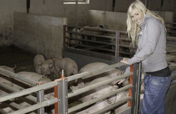 Female with piglets. Smiling blonde female outsise an animal box with piglets stock image