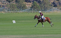 Female Polo Player. A female polo player chasing the ball in the Chukkers for Charity polo match in Bend, Oregon royalty free stock photo