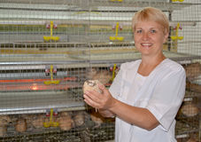 The female poultry breeder holds in hand a quail (focus on a bir Stock Photography