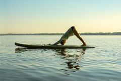 Female practicing yoga on a SUP board. During sunny morning on a large river. Stand up paddle boarding - awesome active recreation in nature. Side view royalty free stock photography