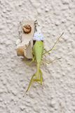 Female praying mantis laying eggs Royalty Free Stock Photography