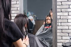 Female professional stylist combing wet hair of young brunette c. Lient while she is sitting in armchair in beauty salon Royalty Free Stock Image