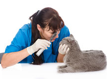 Female professional vet doctor examining pet cat eyes. isolated Stock Photos